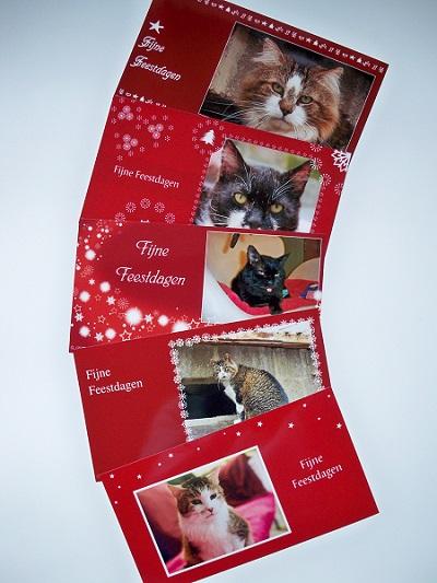 Kerstkaart Buddy Kat